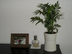 bamboo 004