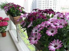 Fleurs - terrasse