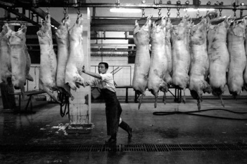 Chinese pork factory